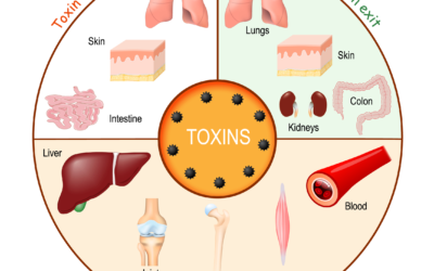 Why toxins build up in our body